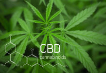 When Will the U.S. Put Forth Regulations for CBD?